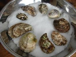 american-mussel-web.jpg