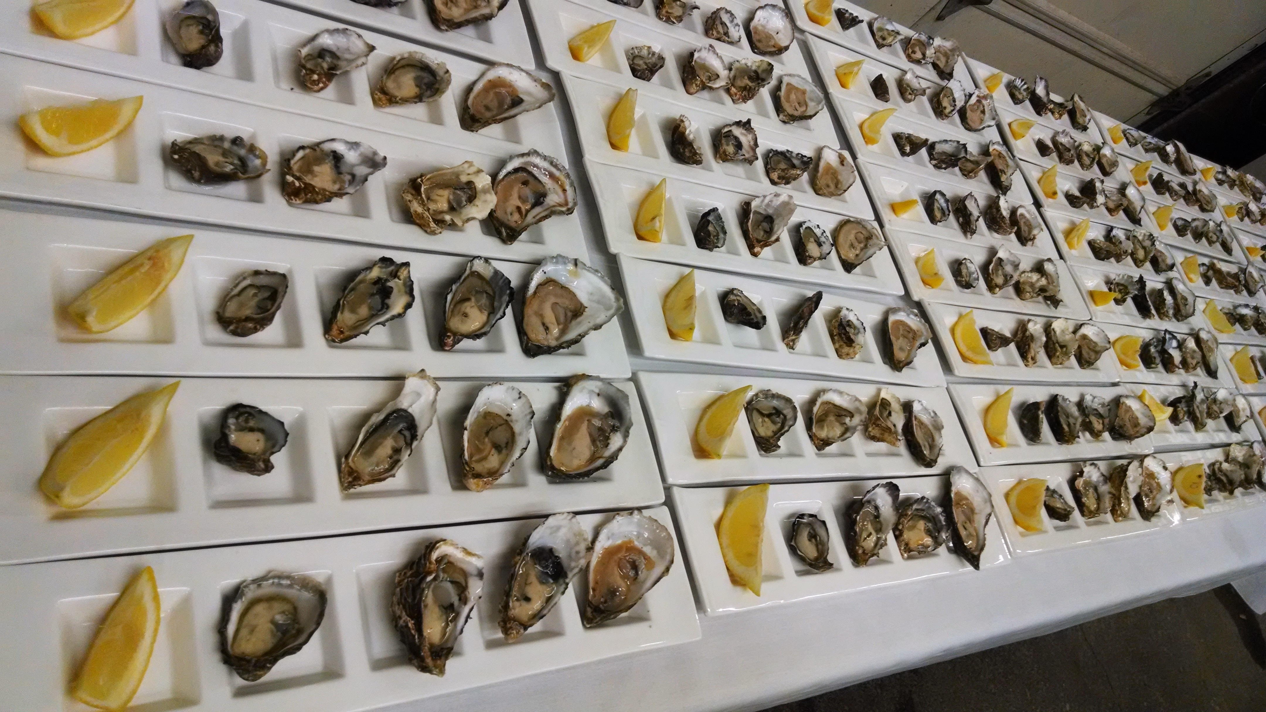 DOWL oyster plates