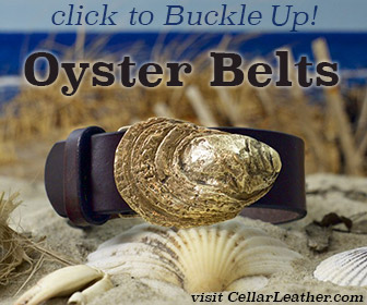 oyster-belts-buckle-up-336x280