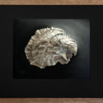 Astounding Oyster Paintings