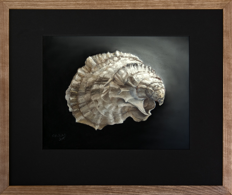 Oyster Shell - Cotuit, MA - Framed, 16 x 19