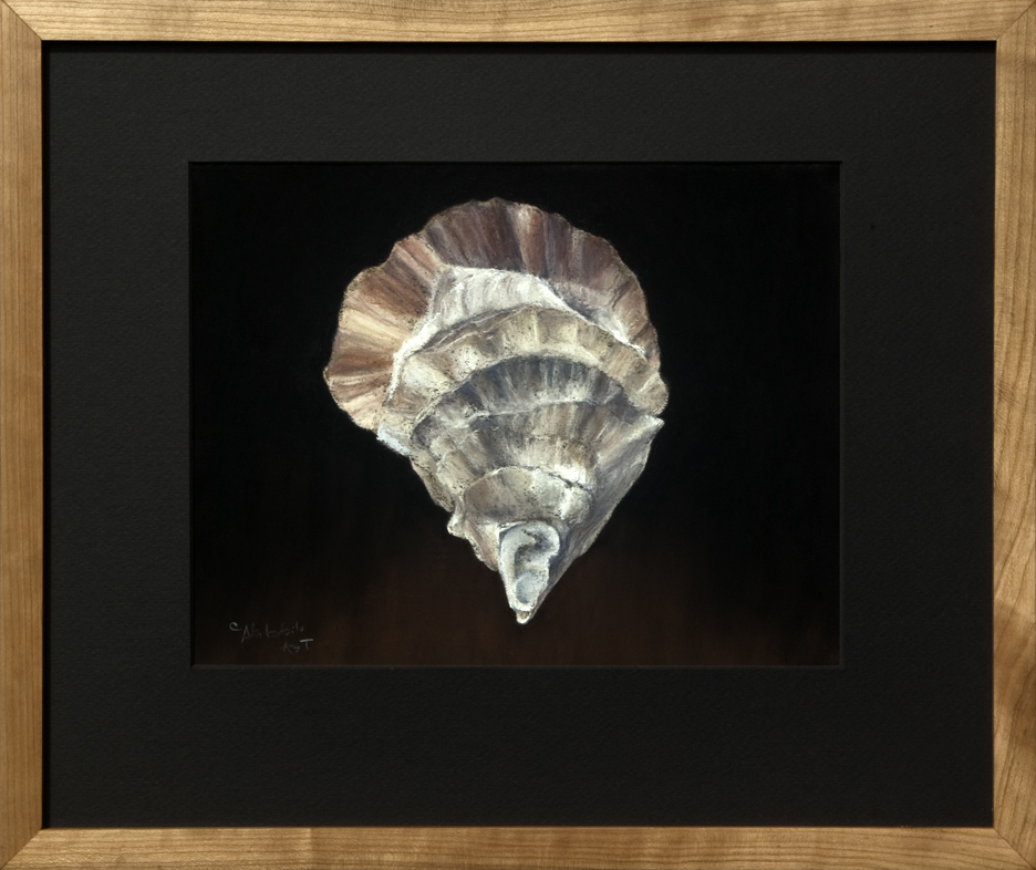 Oyster Shell - Gay Island, ME, #2 - Framed, 16 x 19
