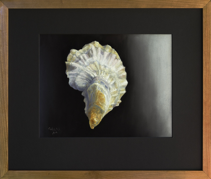 Oyster Shell - Pemaquid, ME, #2 - Framed, 16 x 19