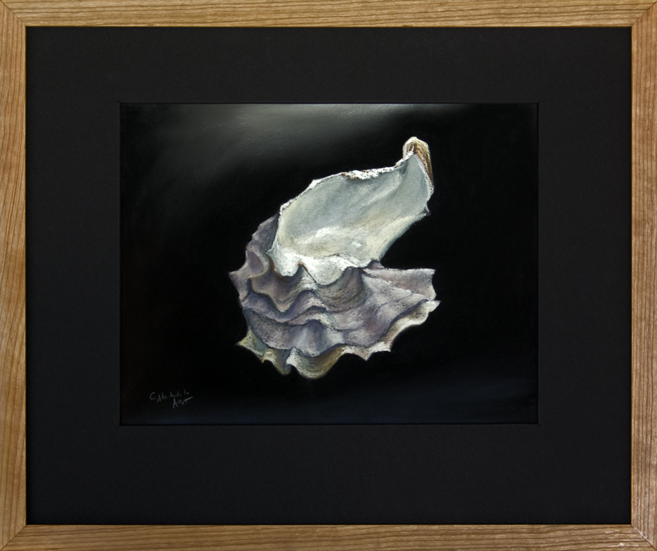 Oyster Shell - Siamese Twin Shells from Sunset Beach, WA - Framed, 16 x 19