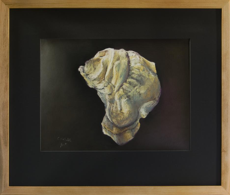 Oyster Shell - Westkeag River Aphrodite, ME - Framed, 16 x 19
