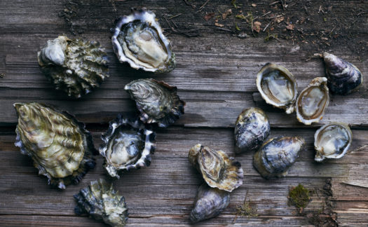 Great Interview on Oyster Photo Styling with Adrienne Anderson