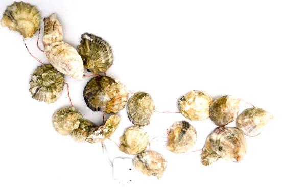 oyster lights